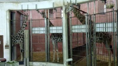 En el Zoo de Barcelona están matando cachorros de animales