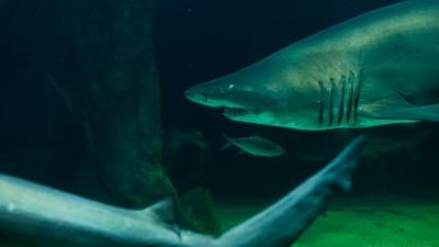 Pasamos un día con un cuidador de tiburones