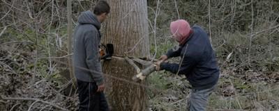 Κάποιοι Άνθρωποι στην Ελλάδα Αναγκάζονται να Κόψουν Δέντρα για να Ζεσταθούν