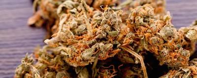 Du hast eine THC-Überdosis – Und jetzt?