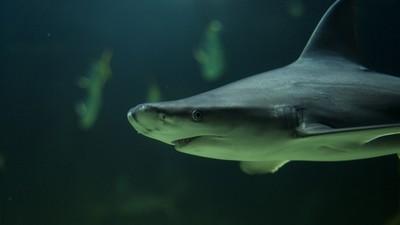 Un día con un tipo que se dedica a dar de comer a los tiburones