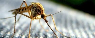 Erradicar os mosquitos da Terra para combater doenças não é boa ideia
