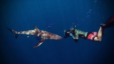 En México los tiburones valen más vivos que muertos