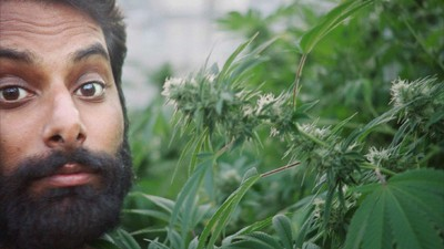 Watch the Trailer for Our New Season of 'WEEDIQUETTE'