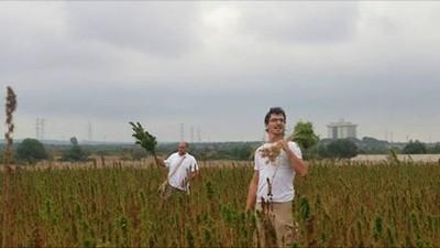 Intorno all'Ilva di Taranto stanno coltivando cannabis per bonificare i terreni