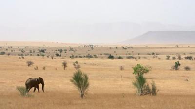 Los elefantes del desierto de Mali en peligro de extinción por las milicias y los traficantes