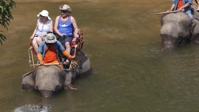 Here's Why You Should Never Ride an Elephant in Thailand