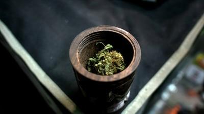 Senado abierto al uso medicinal de la mariguana: continúa el debate en el Congreso