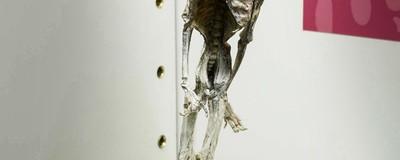 Momias, instrumentos de tortura y cráneos trepanados: descubrimos el mejor/peor museo de Madrid