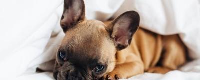 Por qué somos tan adictos a los cachorritos tiernos