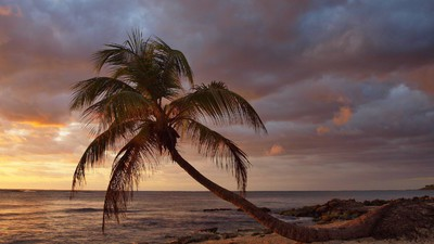 Karibische Träume vom Cannabis-Wirtschaftswunder – Sind Bananen gefährlicher als Gras?