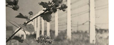 Greetings from Auschwitz: A Book about Postcards from the Worst Holiday Ever