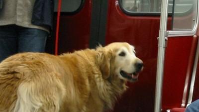 Perros en el metro de Madrid, ¿sí o no?