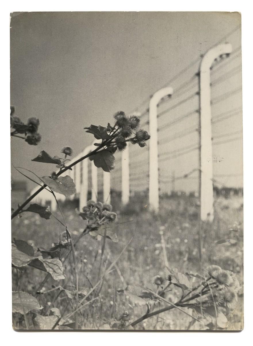 Saluti da Auschwitz: questo artista ha raccolto le cartoline dai luoghi dell'Olocausto