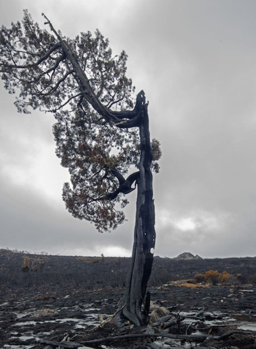 Photos of Tasmania's Sad, Burned Out Wilderness