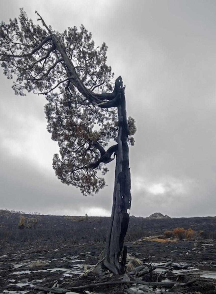 Die verbrannte Wildnis Tasmaniens