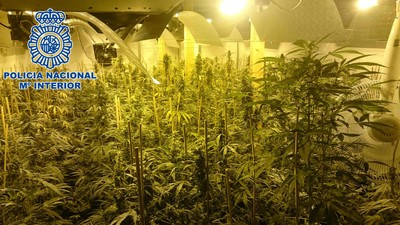 El 'boom' de las plantaciones de marihuana en España