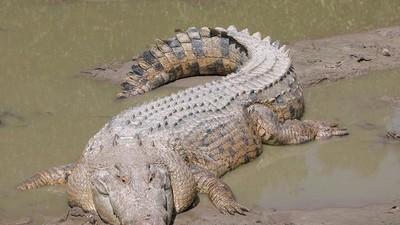 Laten we het even hebben over de krokodillenvergunning van die methdealer