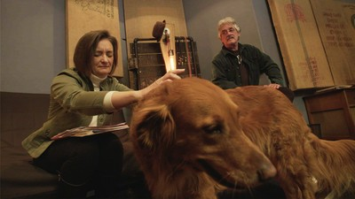 We Visit a Record Label Making Music for Dogs on Today's Episode of 'Daily VICE'