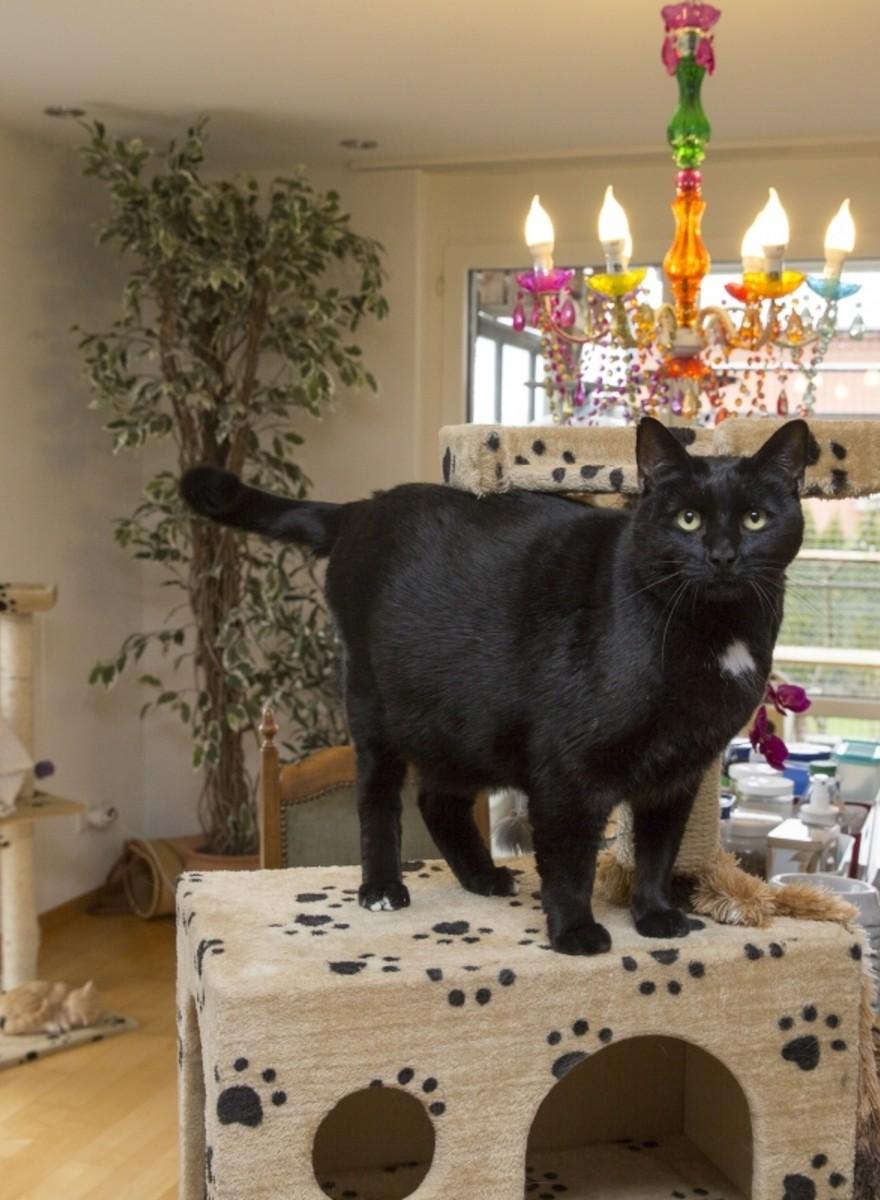 Zu Besuch in einem Schweizer Luxushotel für Katzen