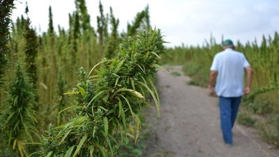Tres conceptos para no temer la legalización de las drogas