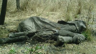Why Some 'Radical Conservationists' Think We Need to Abolish Capitalism to Save the Animals