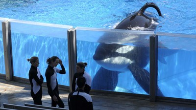 SeaWorld Says the Current Generation of Captive Orcas Will Be the Park's Last
