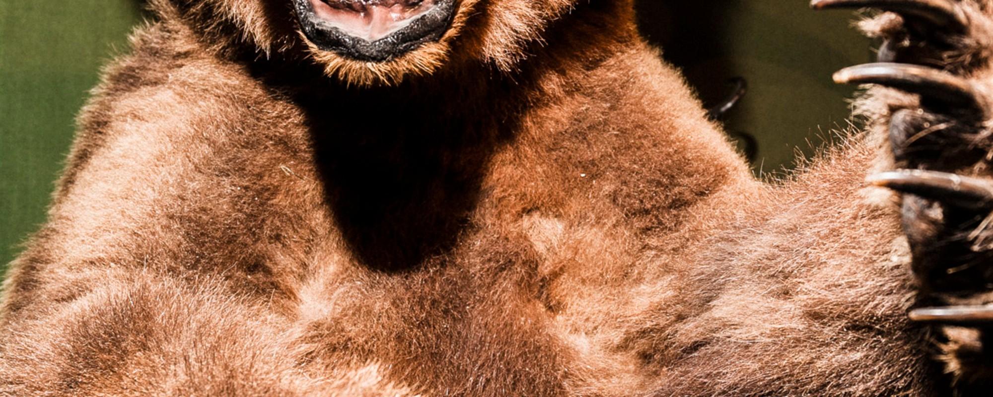 Visitamos la feria madrileña de los cazadores de animales exóticos