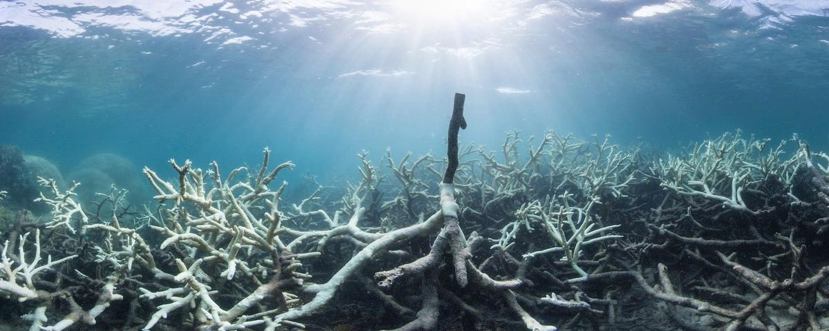 Coral Bleaching in the Great Barrier Reef Sure Looks a Lot Like Climate Change