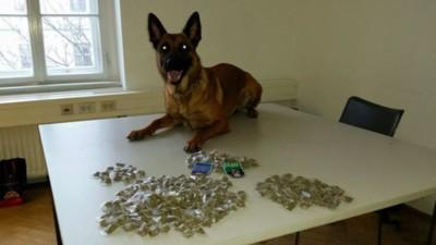 """""""Snoop Dogg"""": Dieser Wiener Polizeihund hat 294 Baggies Gras erschnüffelt"""