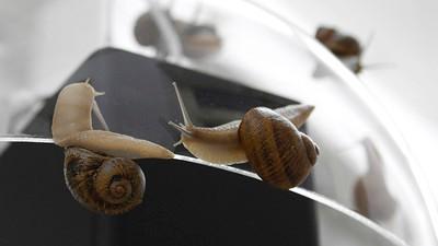 Op de Unfair-beurs kun je kennis maken met levenselixer gemaakt van slakkenslijm