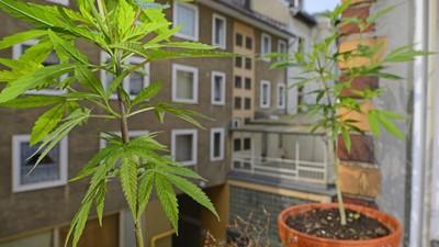 Cannabis-Patient vs BRD: 3:0 – Anbau genehmigt