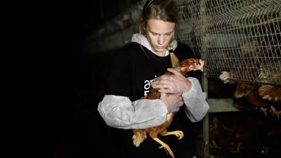 """""""Ich stoße schon an meine Grenzen"""": Im Gespräch mit einer Tierschutzermittlerin"""