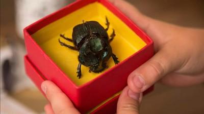 'O Escaravelho do Diabo', o filme, valoriza mistérios e pega leve na violência
