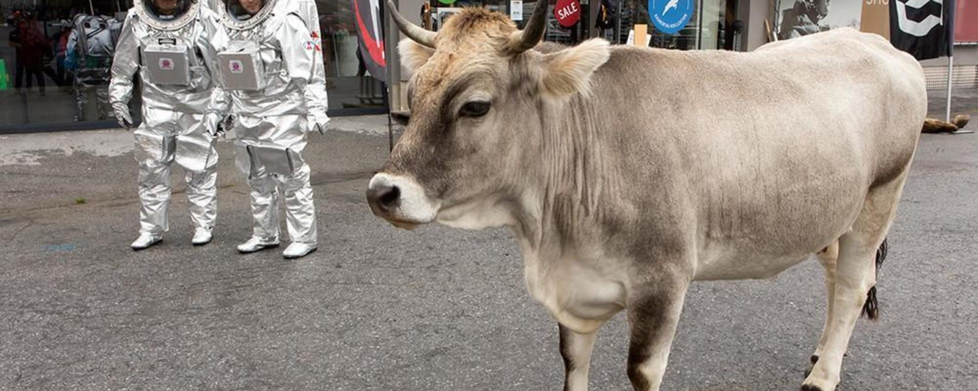 Misión a Marte entre vacas