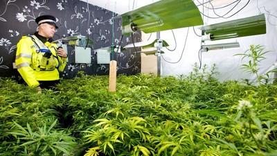 Weed, MDMA, weed : le rôle de la France dans le marché de la drogue