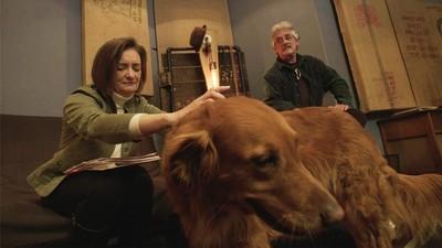 La Musique pour les chiens, par les chiens