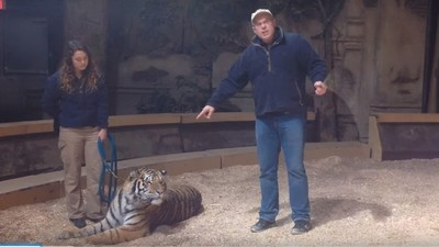 The Zoo Owner Who Called a Baboon a 'Cocksucker' on TV Has Been Charged for Whipping a Tiger