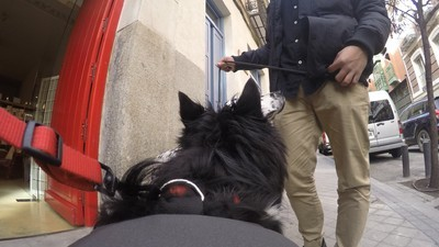 Estos tipos han inventado un chaleco para que los perros publiquen fotos en Facebook