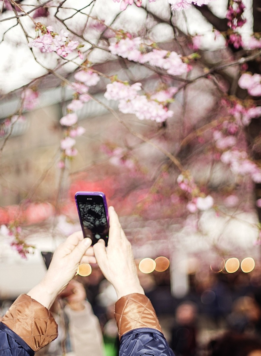 Photos of People Taking Photos of Cherry Blossom