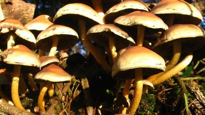 Shrooms Make Rejection More Chill, Study Says