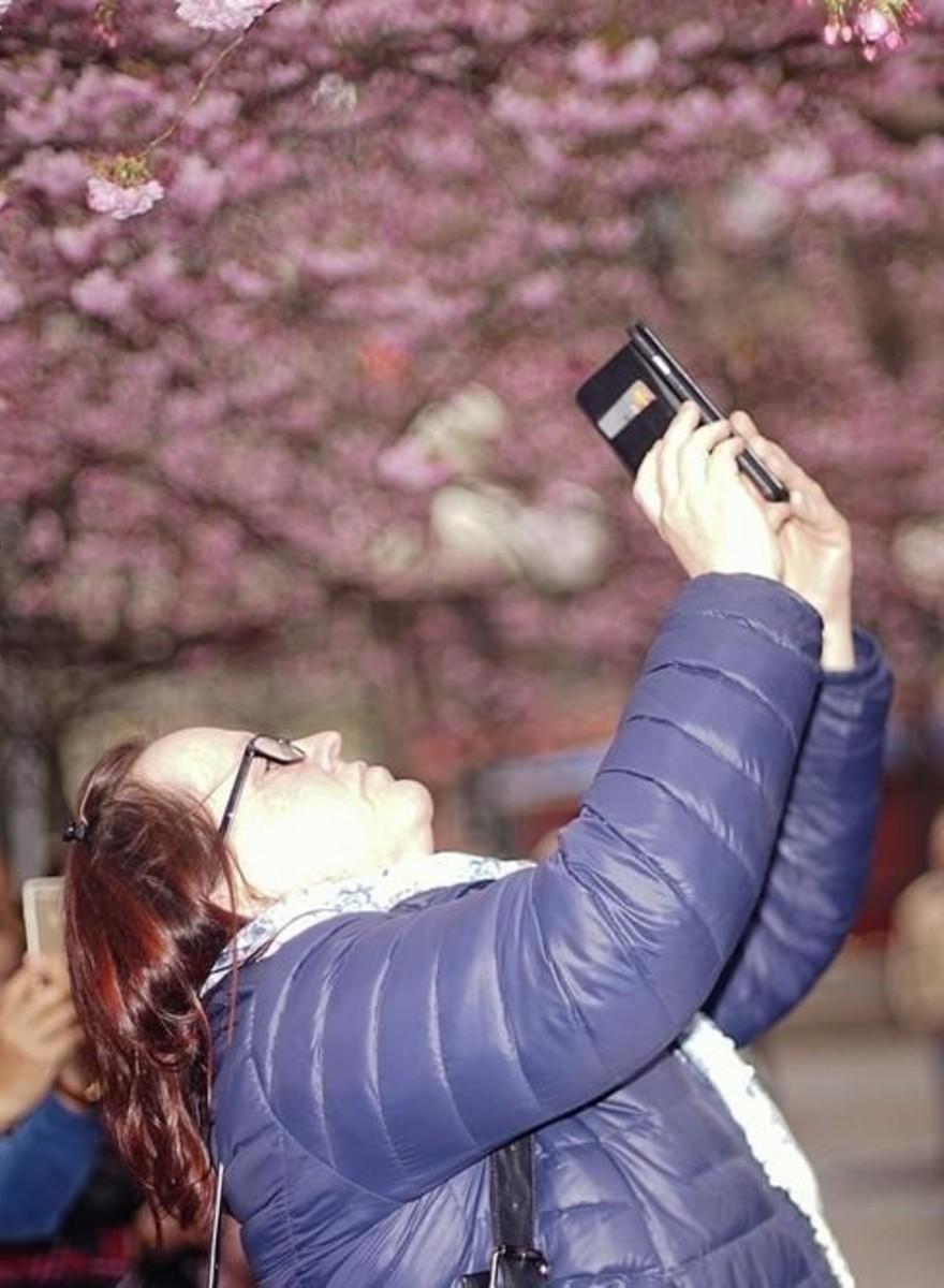 Fotos de personas tomando fotos de las flores de cerezo en Estocolmo