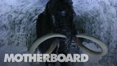 A missão para ressuscitar o lendário mamute