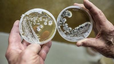 În căutarea unor antibiotice noi