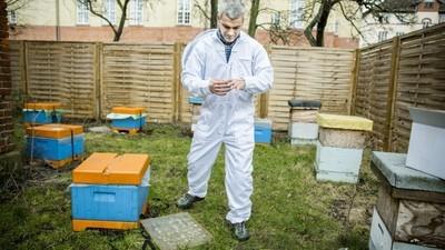 À la rencontre d'un apiculteur syrien qui a fui l'État islamique