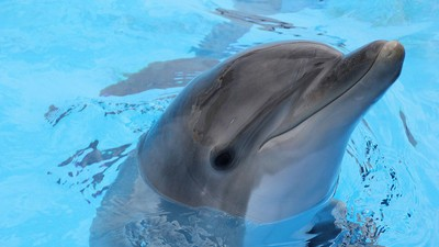 The Russian Military Just Spent $26,000 on Five Dolphins for Some Reason