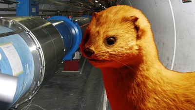 A Tiny Weasel Shut Down the Entire Large Hadron Collider