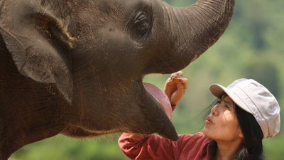 'Their Life Has So Much Suffering': Meet Thailand's Elephant Whisperer