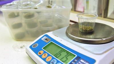 Wenn du medizinisches Cannabis anbauen willst, musst du einiges beachten