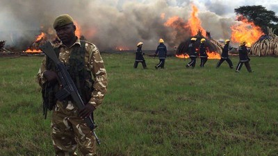 Kenya Just Torched About £1 Million Worth of Elephant Tusk